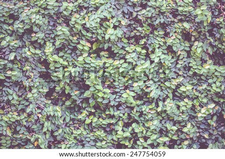 vintage filter: Green leaves wall background