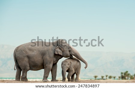 elephant mother and baby on a nature with mountains on background