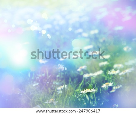 Green grass and chamomile flowers in the nature, meadow of flowers, spring floral landscape #247906417