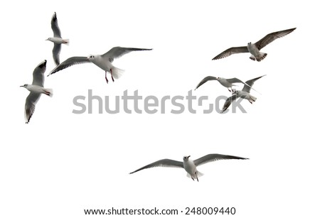 flying seagulls Royalty-Free Stock Photo #248009440