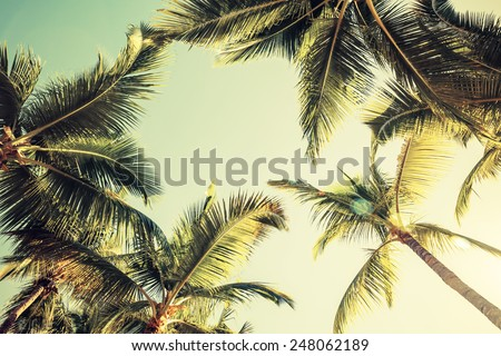 Coconut palm trees over bright sky background. Vintage style. Toned photo with instagram filter