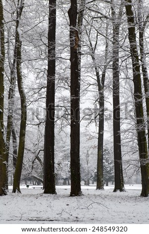 Winter landscape, park covered in snow #248549320