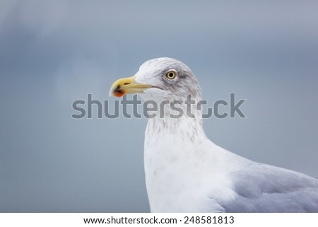 Portrait of seagull on a pier on the Baltic Sea #248581813