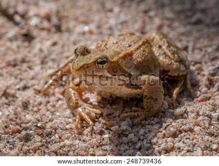 Frogs eye #248739436