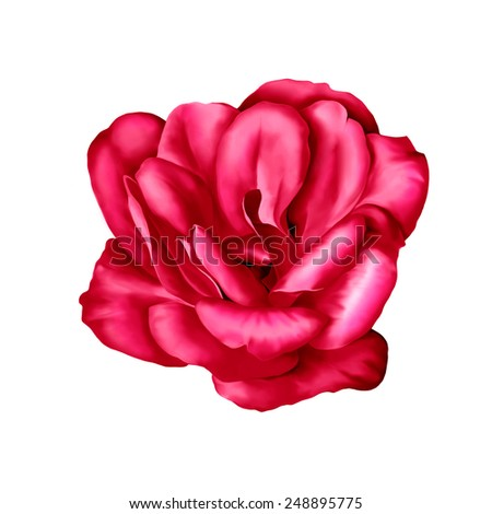 Red Camelia Flower isolated on white background. illustration #248895775