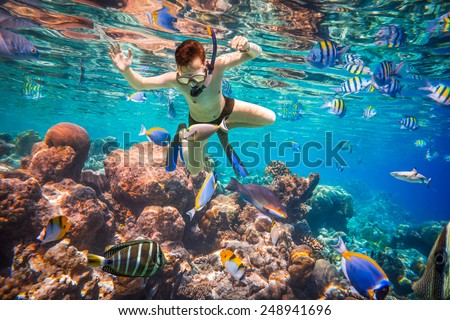 Snorkeler diving along the brain coral. Maldives Indian Ocean coral reef. #248941696