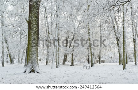 scenic winter landscape in the park #249412564