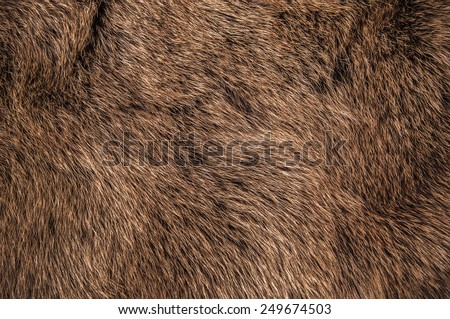 Red Brown Grey Wolf, Fox, Bear Fur Natural, Animal Wildlife Concept and Style for Background, textures and wallpaper. / Close up Full Frame. Royalty-Free Stock Photo #249674503