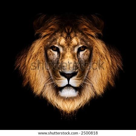 lion #2500818