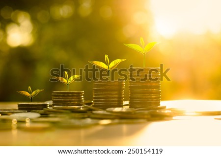 Money growing concept,Business success concept,Trees growing on pile of coins money over sun flare silhouette style Royalty-Free Stock Photo #250154119