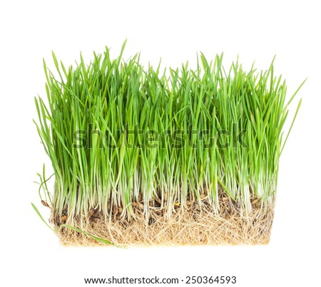 fresh green grass isolated on white background #250364593