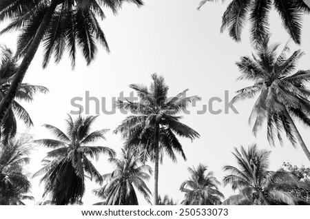 Coconut palm trees against  sky  Royalty-Free Stock Photo #250533073