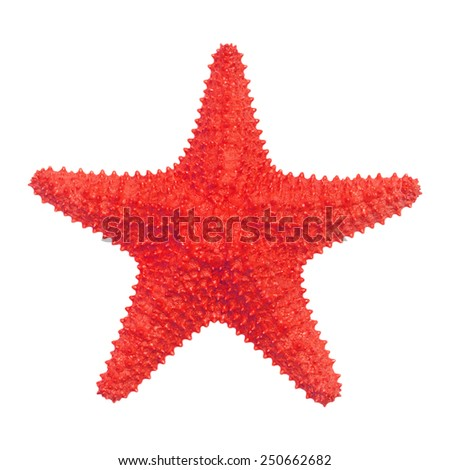Caribbean starfish isolated on white background. Royalty-Free Stock Photo #250662682