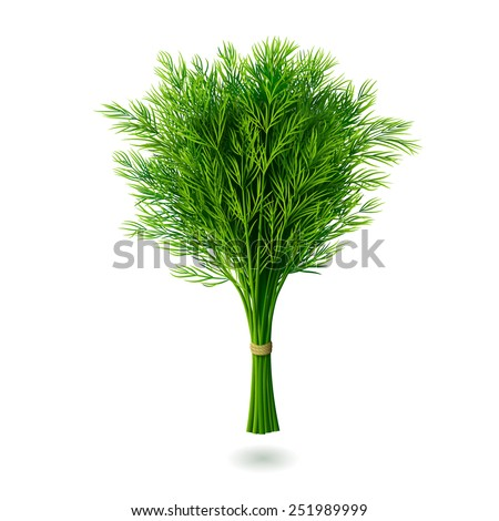 Bunch of fresh dill with shadow isolated on white background. Realistic vector illustration. Royalty-Free Stock Photo #251989999
