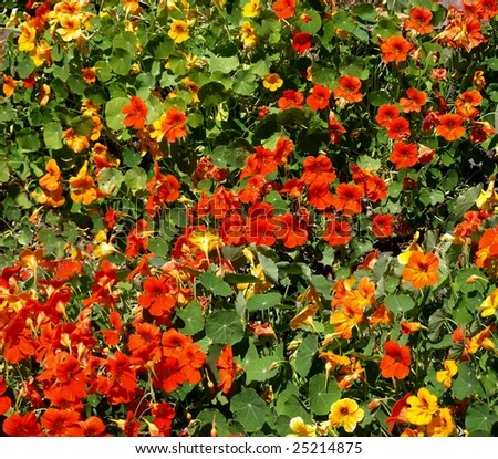 Red and yellow flowers in Oregon #25214875