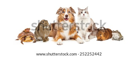 Group of domestic animals sized to fit popular social media timeline cover place holder #252252442