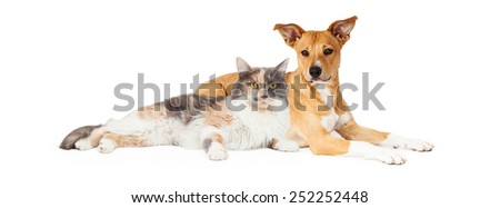 Mixed breed dog and calico cat laying together #252252448