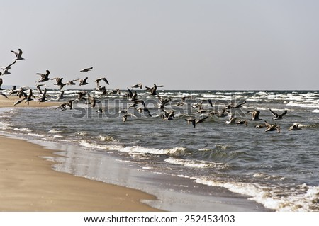 seagulls on the beach #252453403