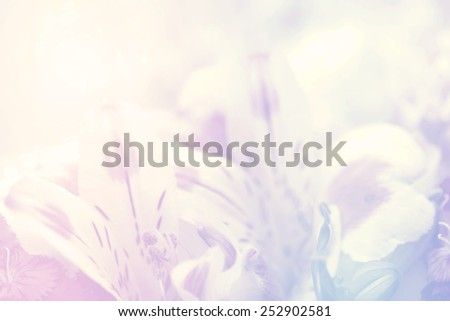 flower on soft pastel color #252902581