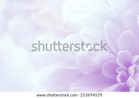 flower on soft pastel color in blur style #253694539