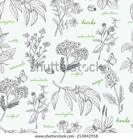 Vector seamless pattern with herbs on a white background. Vector illustration for your design #253842958