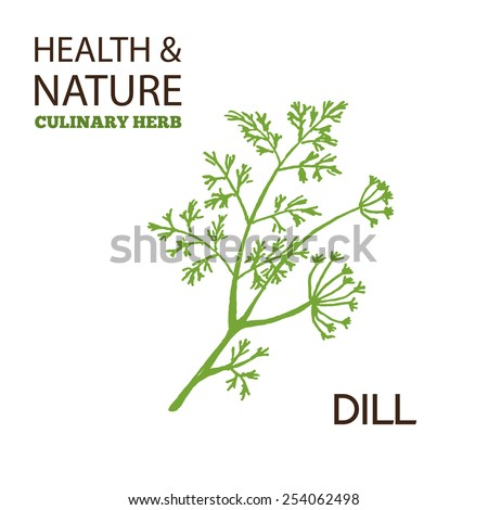 Health and NatureCollection.  Culinary herbs. Dill -  Anethum graveolens  #254062498