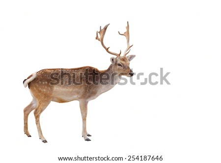 Deer in the woods isolated on white background #254187646