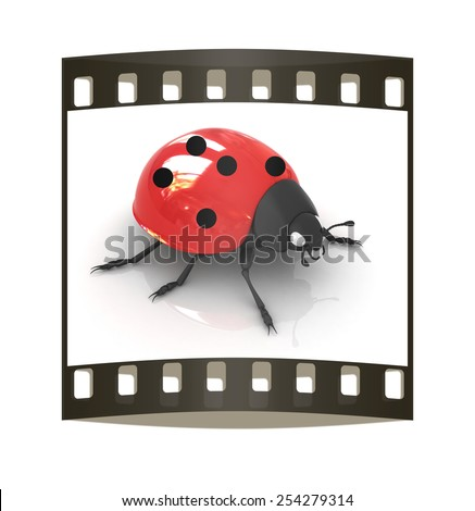 Ladybird on a white background #254279314