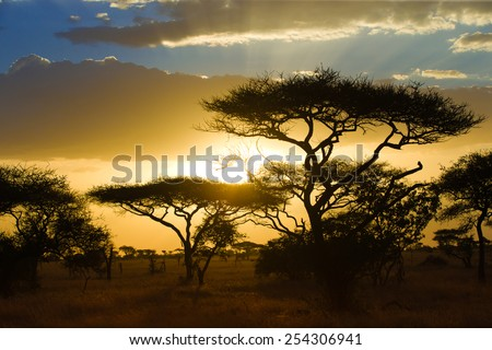 Sunset on the African savannah