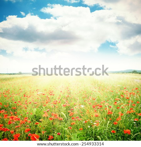 sunny day of spring time and flowers of red color  #254933314