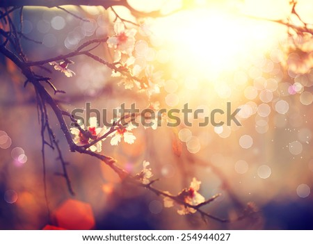 Spring blossom background. Beautiful nature scene with blooming tree and sun flare. Sunny day. Spring flowers. Beautiful Orchard. Abstract blurred background #254944027