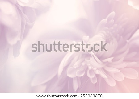 flower on soft pastel color in blur style #255069670