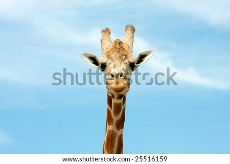 Giraffe #25516159