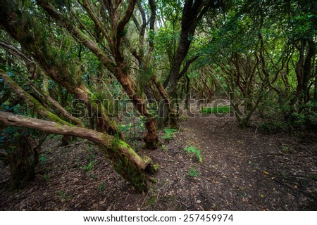 Among the moss and trees. Tenerife Spain #257459974