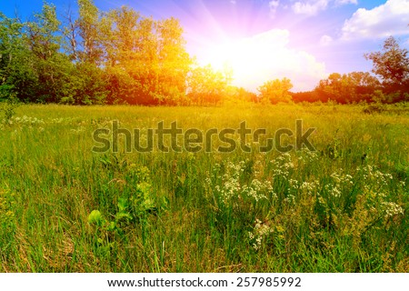 Summer meadow in nice day #257985992