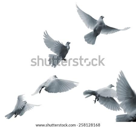 Flying white pigeons #258128168