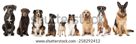Group of dogs #258292412