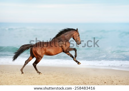 Beautiful brown horse galloping along the shore of the sea on a summer day. Stallion with long mane jumping on background of ocean