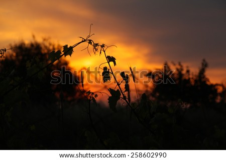 Sunset landscape with leaves silhouette. #258602990