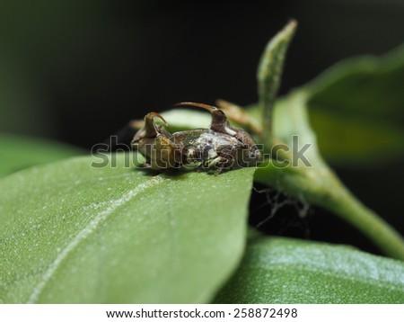 Bugs' Fertilization #258872498
