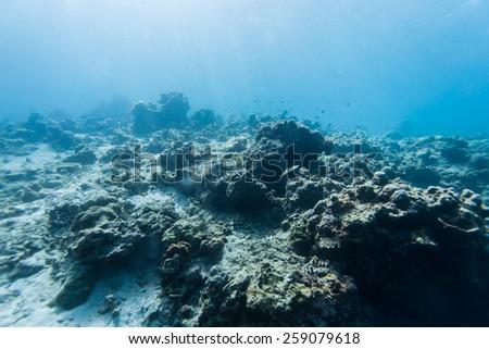under the sea #259079618