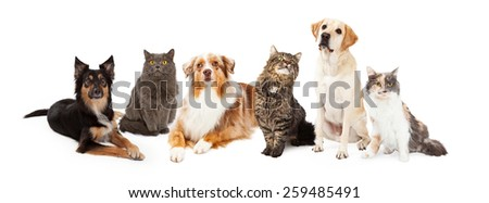 A row of dogs and cats of different breeds #259485491