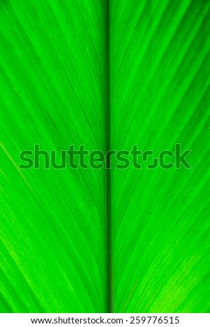 Texture of a green leaf as background #259776515