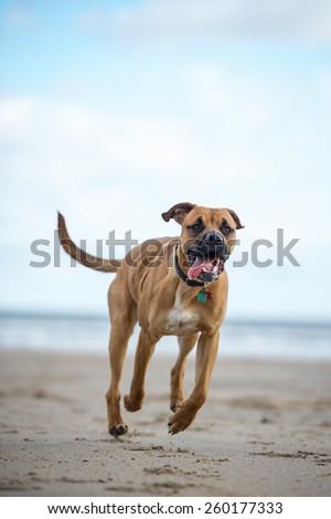 Dog on the beach #260177333