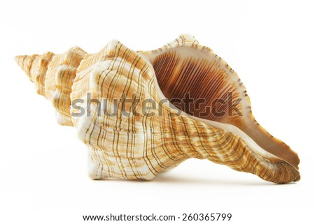 Sea shell on white background Royalty-Free Stock Photo #260365799