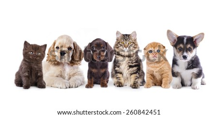 Group of  dogs and  kittens sitting in front of a white background #260842451