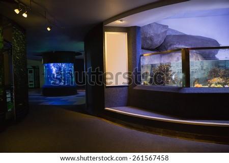 Lit up fish tank at the aquarium #261567458