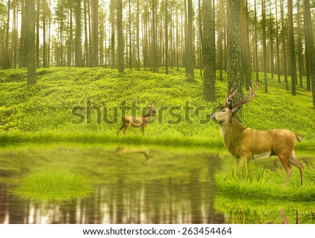 Deer Bucks in summer velvet standing in an opening in the woods. Two deers with stag horns in forest with lake on background with green trees morning day light. Wild life landscape scene screen saver