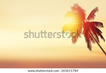 Tropical panoramic background with coconut palm at sunset and ocean landscape