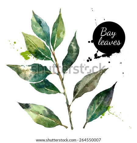 Kitchen herbs and spices banner. Vector illustration. Watercolor bay leaf Royalty-Free Stock Photo #264550007